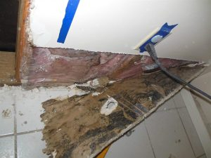 mold damage4
