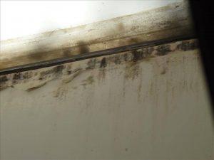 mold damage9