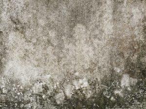 wall mold damage