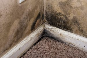 mold cleanup bakersfield, professional mold cleanup bakersfield