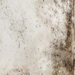 mold cleanup bakersfield, mold damage bakersfield